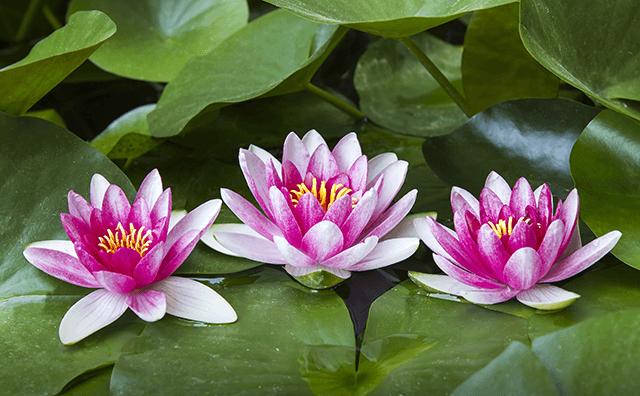 「3つのヨガ」~カルマ・ヨガ/瞑想のヨガ/知識のヨガ